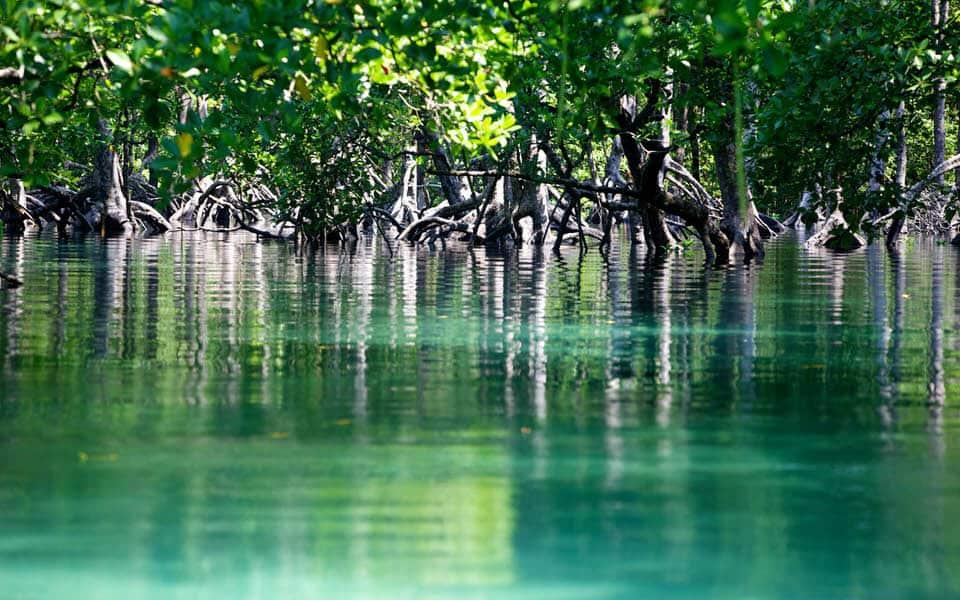 Mangrove in Myanmar