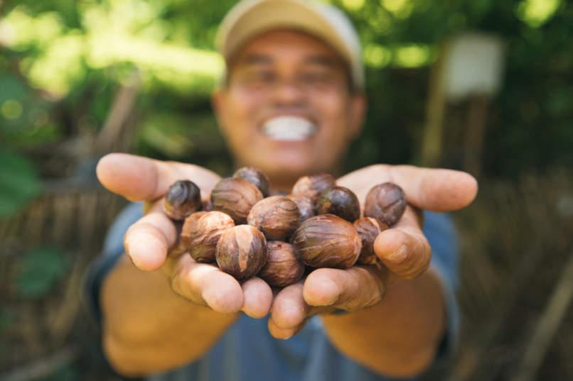 Nutmeg in Run Island