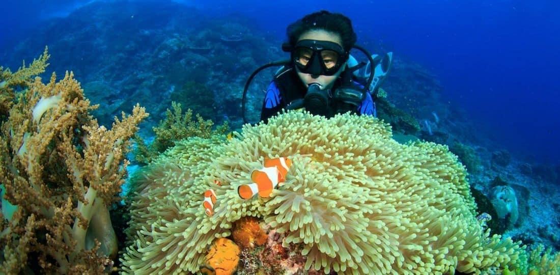 diving flores sea