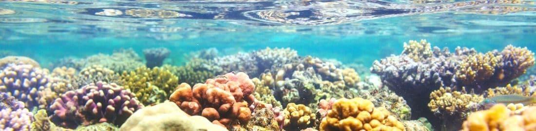 seafloor flores sea komodo national park