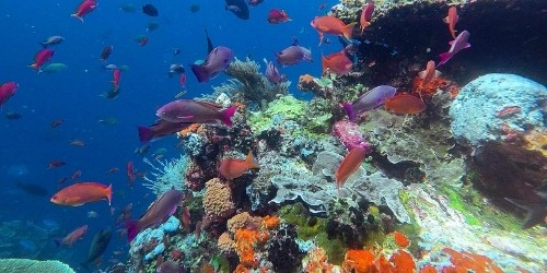 Siaba corals and small fishes