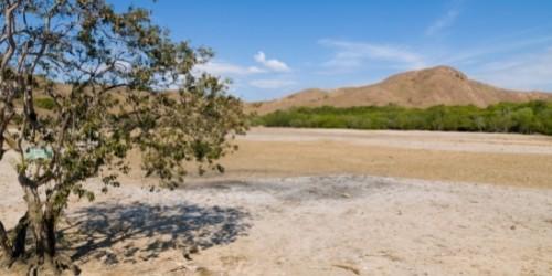Rinca Islands deserted savanna
